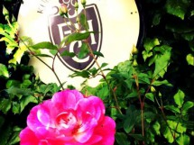 熊本ワインファーム(株)/西里醸造所