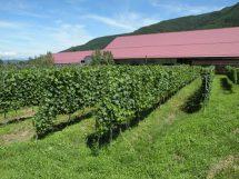 【ワイナリーを知る・第4回】岩の原葡萄園 日本のワイン用ブドウの父「川上善兵衛」の遺徳を今に